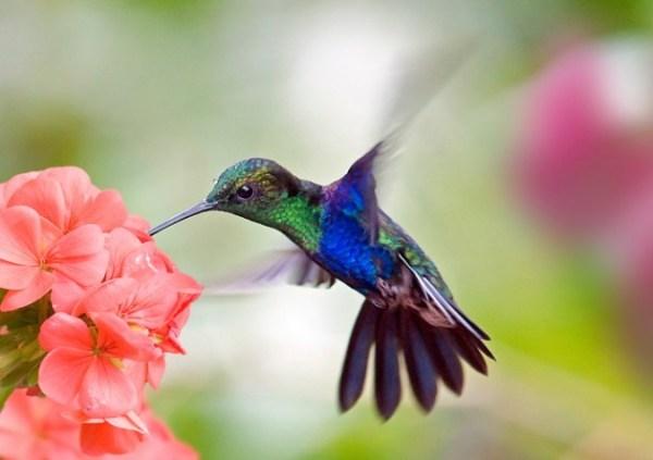 flower-and-hummingbird-webguzs-630x444