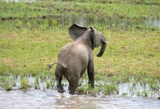 Elephant GOP Republican Party