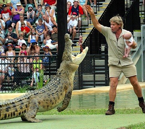 STEVE IRWIN SPARKING OUTRAGE AS HE HOLDS BABY SON IN FRONT OF CROCODILE, QUEENSLAND ZOO, AUSTRALIA - 02 JAN 2004