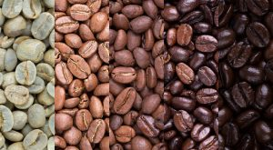 Stages of Coffee Bean Development