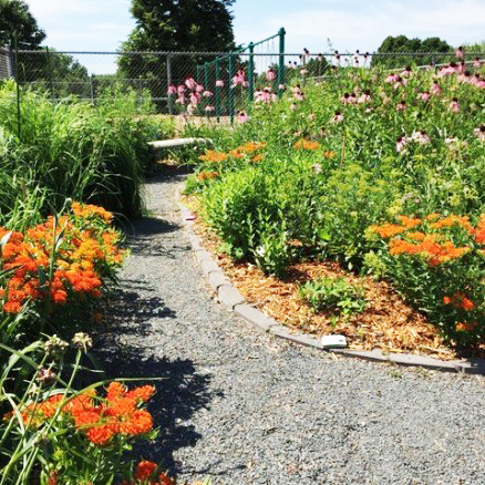 A gravel path through a blooming flower garden.