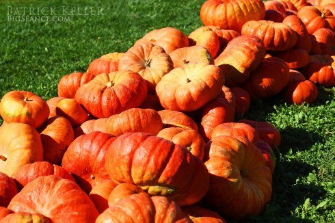 Rombachs Farm, pumpkin patch, big seance