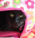 Sue relaxing in her carrier.  (Photo by Ashley Jones.)