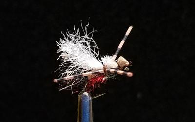 Big Sky Anglers Featured Fly – JoJo's Ant, Royal