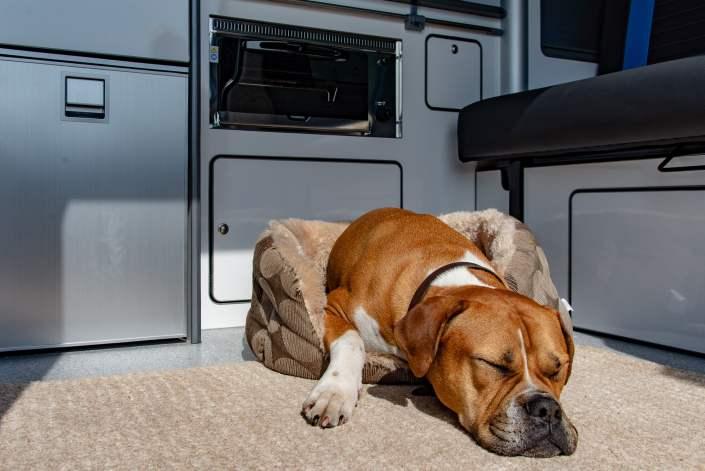 dog friendly camping scotland
