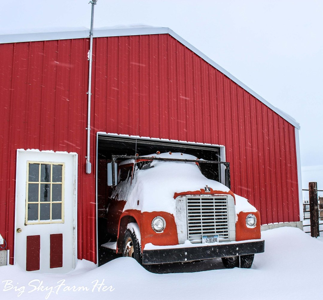 Winter Storm-7787