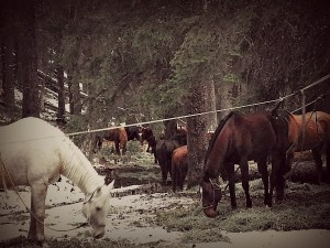 Rent a Horse for Fall - Big Sky Horse Leasing