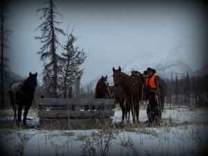Rent Horses for Fall - Big Sky Horse Leasing