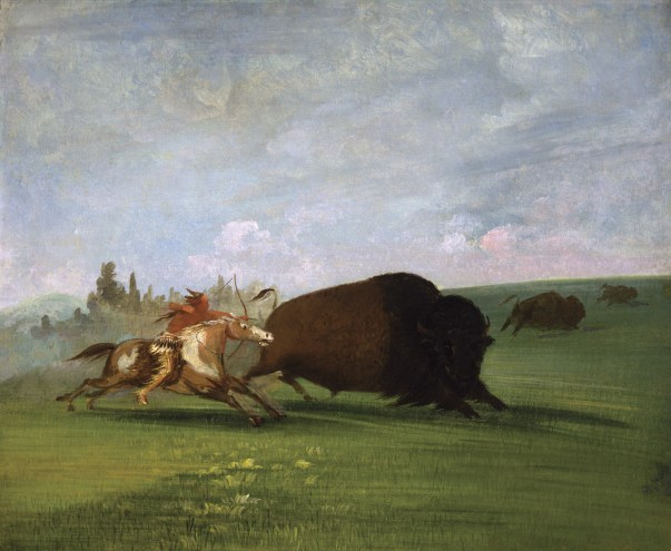 """Buffalo Chase, a Single Death"" 