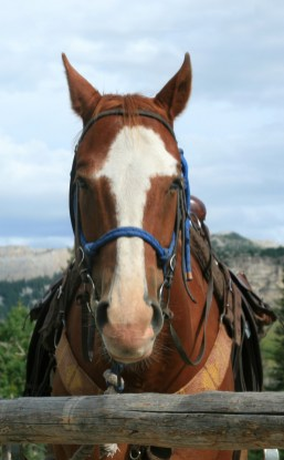 Horseback riding on the ranch's good natured mounts is offered daily. Photo by Simon Williams