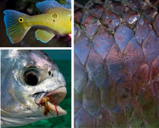 Clockwise from left: Amazon Peacock Bass, Agua Boar River, Brazil | Tarpon Scales, Long Caye, Belize | Cuban Permit with Avalon Shrimp Fly, Cayo Largo, Cuba