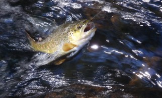 Photo courtesy of Tenkara U.S.A.