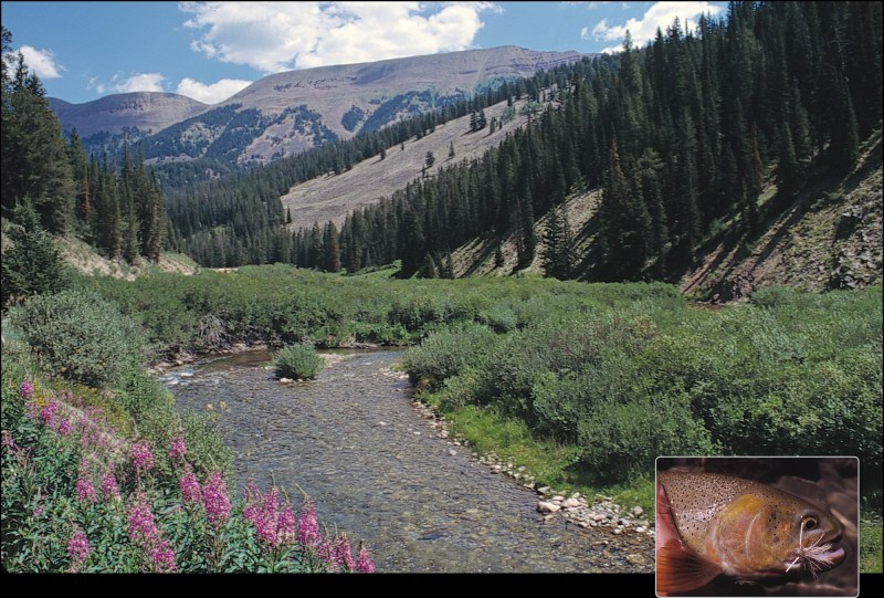 The Headwaters to Wyoming's Wild Cutthroat Paradise - Big Sky Journal