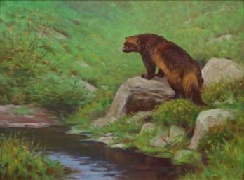 """Wolverine""   Oil on Linen   18"" x 24""   Muskwa Kechika Mountains, British Columbia"
