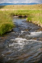 Once a clogged artery of the Madison River, O'Dell creek now pumps clean, spring-fed, cool water through its channels.