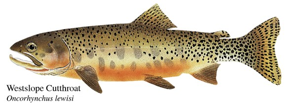 Fish art, anyone?