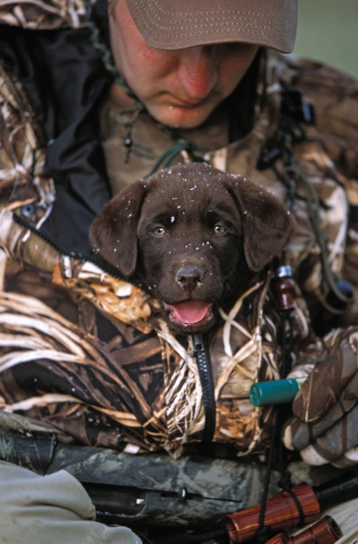 Tre Taylor gives his new lab puppy, Sage, a soft introduction to duck hunting.