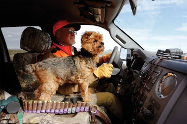 Bird hunter Wayne Fredrickson heads out on a hunt with his pointers in tow, but always with his yorkie, Henry, riding shotgun.