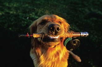 """When his golden retriever, Taylor, was still in the chew-on-everything phase, photographer Denver Bryan left his fly rod leaning against his back door one day after fishing. """"I came out a while later to see Taylor greeting me with a smile, having had his way with my fly rod."""" Photo by Denver Bryan"""