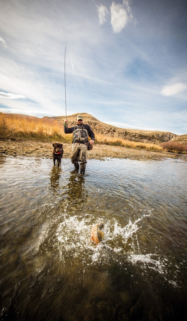 The Beaverhead River is famous as a fall brown trout fishery.