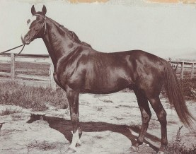 Inverness was a successful racehorse in his native England before Daly brought the stallion to the farm for stud duty.
