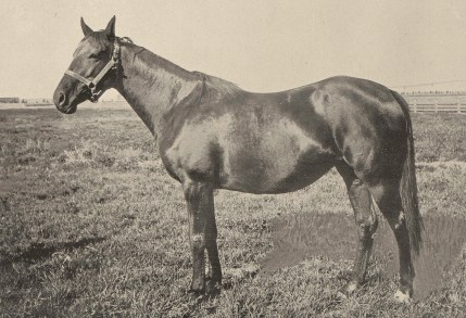 """Miss Darebin. """"A more notable collection of mares than which [Daly] has gathered at Bitter Root has seldom, if ever, been seen in the United States,"""" wrote turf writer Horace Lyman Weeks in 1898."""