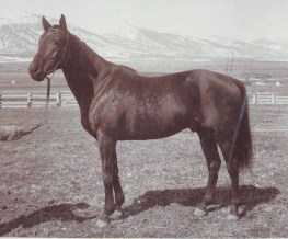 "Ogden was bred at Aperfield Court, a second horse farm in County Kent, England, where Daly diligently gathered Europe's choicest racing stock. After Ogden won the prestigious 1896 Futurity Stakes, turf reporters referred to imported and unknown Ogden as the ""horse of mystery,"" and his jockey, Doc Tuberville, ""boy of mystery."" Ogden won 15 of 28 races, placed second eight times and placed third once, raking in about $160,000. He went on to a successful career as a sire."