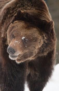 Feed The Bears | Photo by Chuck Haney
