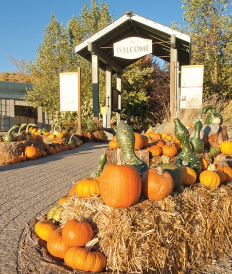 Ripe pumpkins line the entrance of Boise's Botanical Garden.