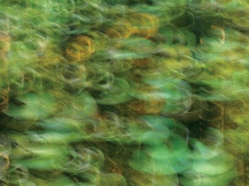 """""""Homage to Monet"""" 