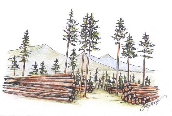timber-harvest_web.jpg