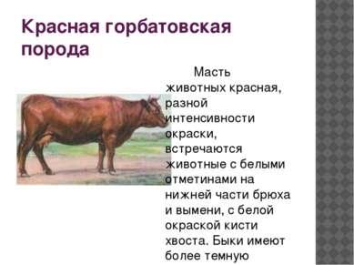 jaučio pagalbinė prekybos sistema)