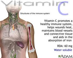 The actions of Vitamin C