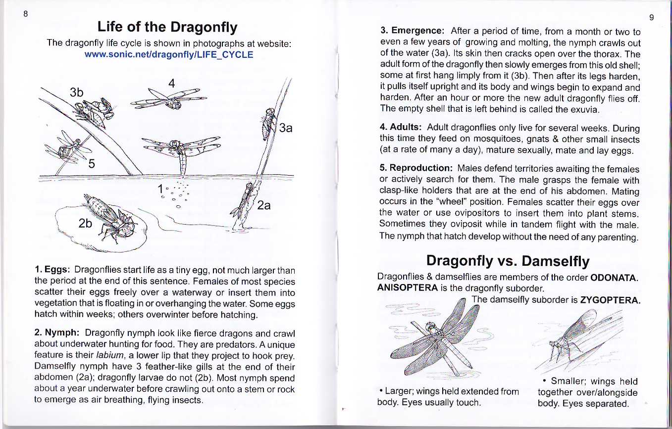 dragonflies eye diagram thermostat wiring 5 wire common of california life a dragonfly