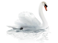 BIG SWAN LAKE TRUMPETER Logo
