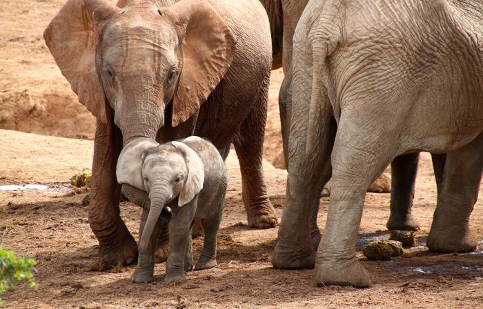Addo Elephant National Park in Addo, South Africa