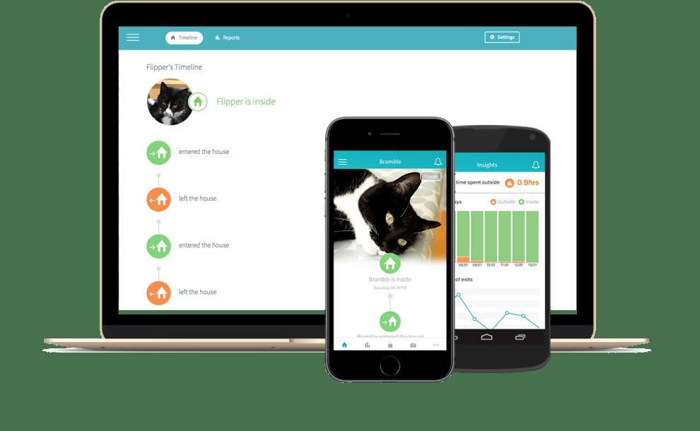 Quantify your cat