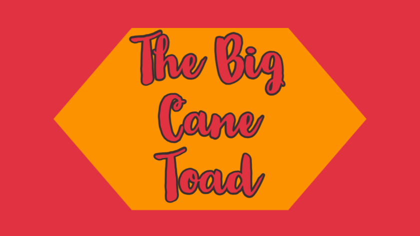 The Big Cane Toad