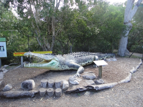 The Big Crocodile in Wangetti