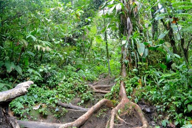 Entrance leading into the jungle