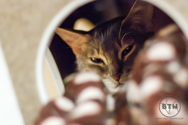 A cat tucked away at a cat cafe in Tokyo, Japan