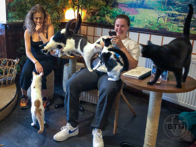 Lots of cats getting fed by patrons at a cat cafe in Bristol, UK