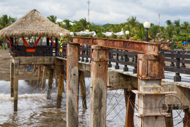 A pier lined with seabirds at the Doubletree Resort in Puntarenas, Costa Rica | BIG tiny World Travel