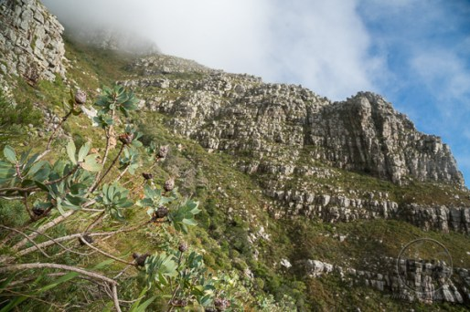 table-mountain-12