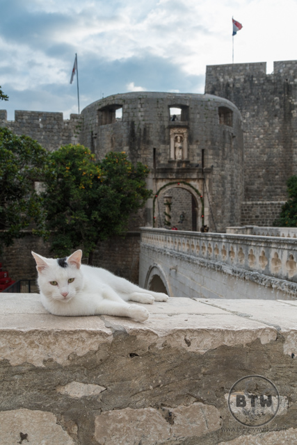 A cat lounging on a wall just outside of Dubrovnik, Croatia