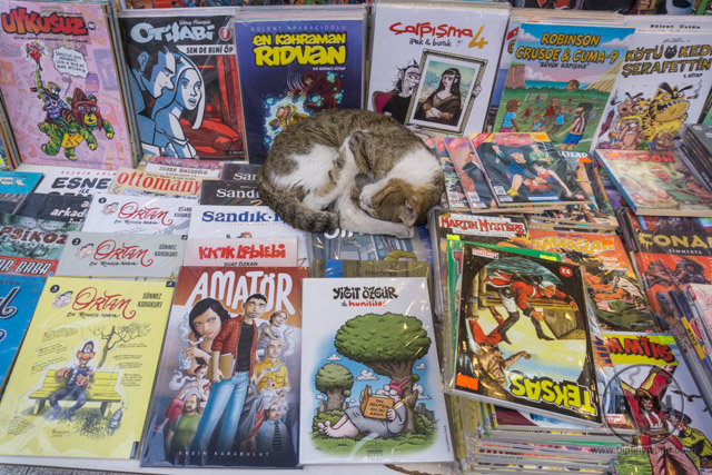 A stray cat curled up on a display of comic books in Istanbul, Turkey