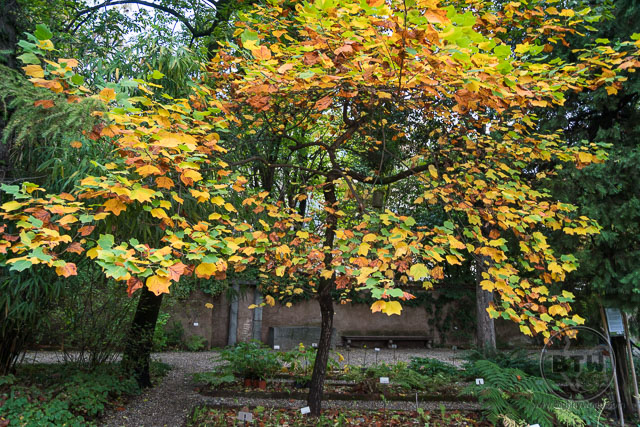Autumn tree in a garden in Milan, Italy