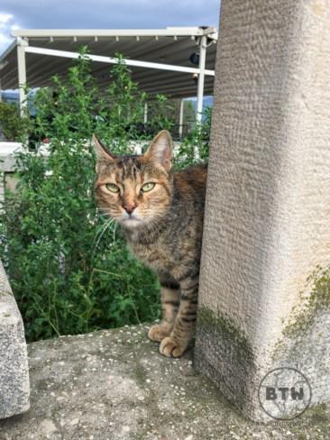 A cat in Telegrin park in Split, Croatia
