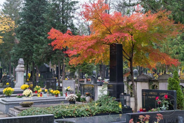 A row of graves under a red tree in a cemetery in Zagreb, Croatia