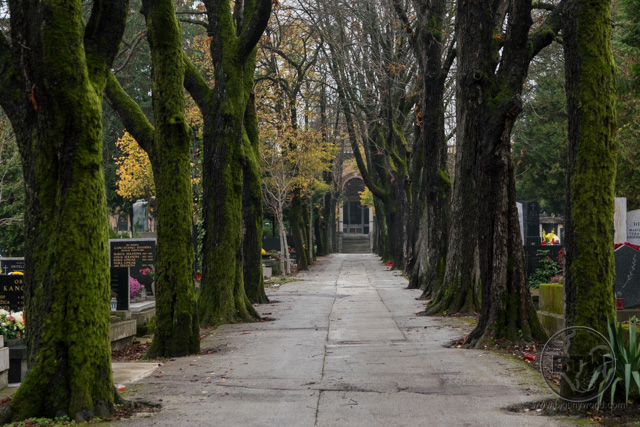 A row of trees in a cemetery in Zagreb, Croatia